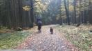 Herbstausritt 2016 | Fotos: Elisabeth Dammer_10
